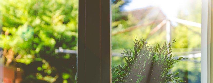 sobne biljke naslovna sigma nekretnine zrenjanin