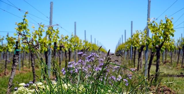 vikendica vinograd sigma nekretnine zrenjanin