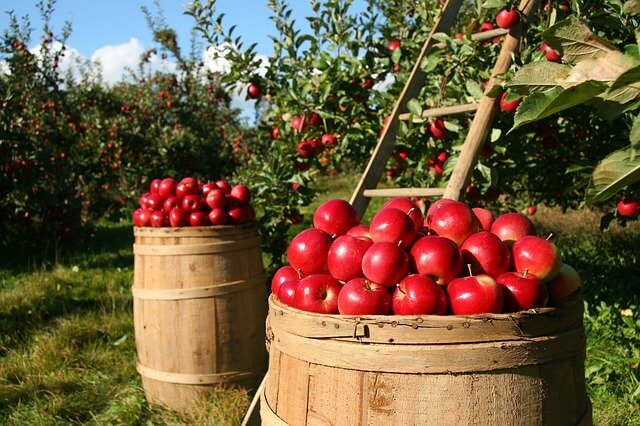 vikendica voćnjak jabuke sigma nekretnine zrenjanin