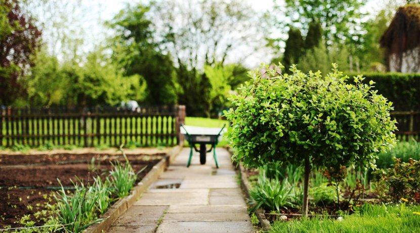 dvorište i drveće naslovna sigma nekretnine zrenjanin
